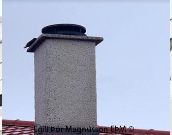 Strompur fyrir  arinn. Starinn að máta sig kannski er næsta hreiður þarna